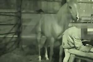 horse fucks